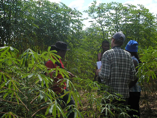 Interview of a farmer in a manioc field, Central Menabe, Madagascar. Journal MCD.