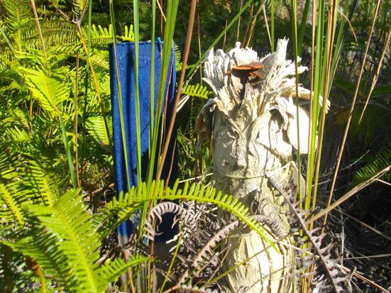 dead trunk of niaouli in Analalava forest; tronc mort de Melaleuca quinquenervia dans la forêt d'Analalava Foulpointe