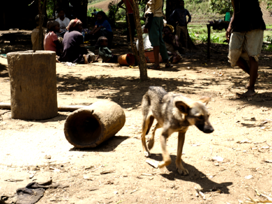 Copyright Arnaud De Grave / Agence Le Pictorium - stray dog;madagascar conservation & development