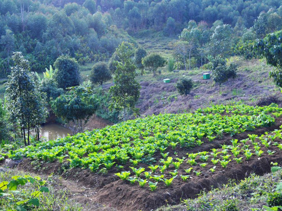 Farming and gardening in a rural landscape of the vicinity of Maromizaha forest, Madagascar