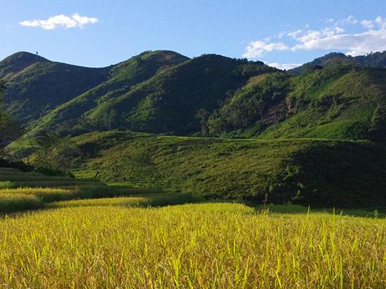 Eastern rainforest Madagascar; REDD +; Madagascar Conservation & Development; ricefields