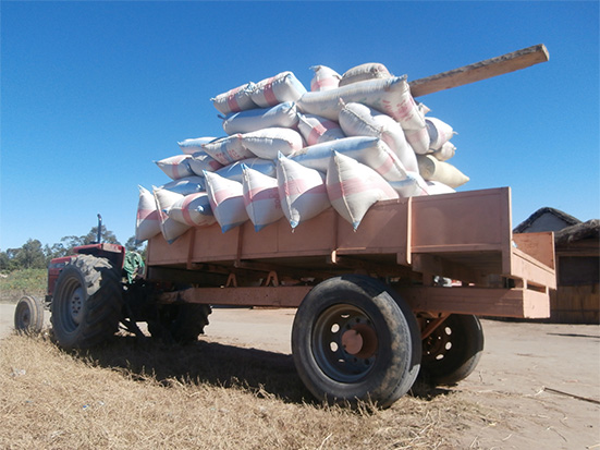 Acheminement des produits agricoles vers le marché régional. Alaotra. Madagascar.
