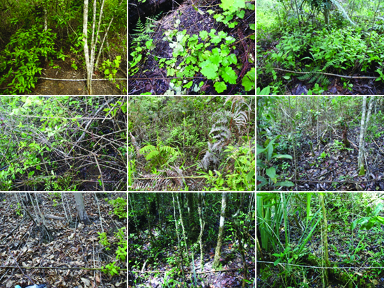 Vegetation thresholds for the occurrence of millipedes (Diplopoda) in different tropical forest types in Andasibe, Madagascar