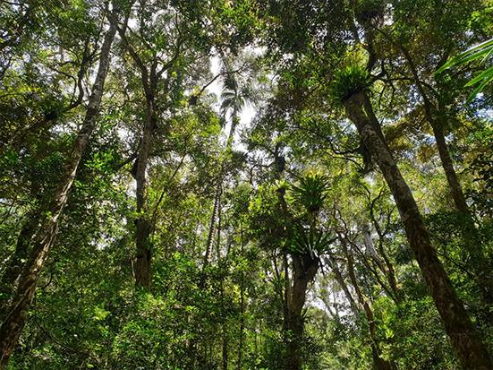 Parc National Montagne d'Ambre, Madagascar, credit Madagascar Conservation & Development