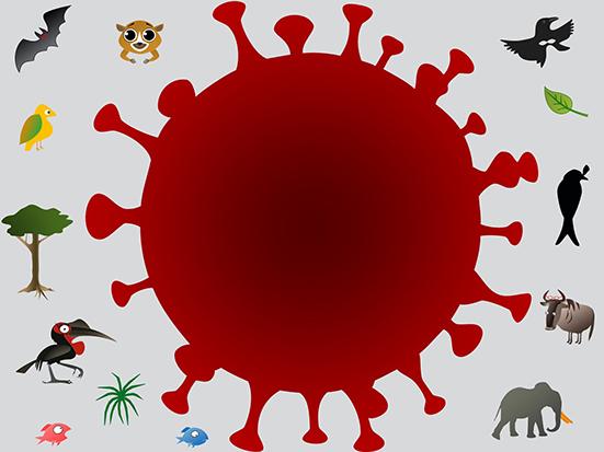 biodiversity and SARS-CoV-2